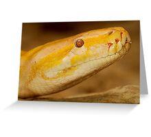 Albino Python Greeting Card