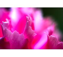 flowers pink macro  Photographic Print