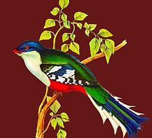 Illustration of The Cuban trogon or tocororo by marmur