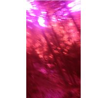 Back to the vivid forest n°12 Photographic Print