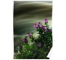 Flowers Over Mill Creek Poster