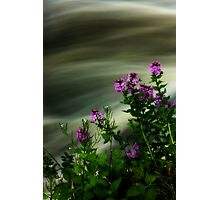 Flowers Over Mill Creek Photographic Print