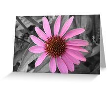 Pink Dog Daisy Wildflower Greeting Card
