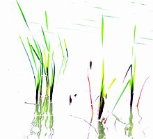 Water Reeds by Ian Coyle