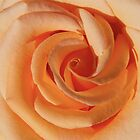 Peach Swirls by MoonLiteStudio