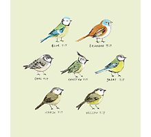 The Tit Family Photographic Print