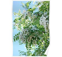 Heavenly Scented Wisteria Poster