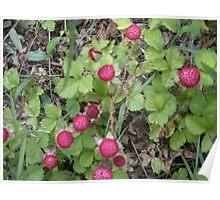 Berry Bush by Catherine Massa Poster