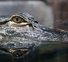 Aligator Eyes by Regenia Brabham