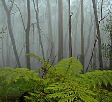 Blue Mountains Mist by Dilshara Hill