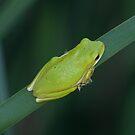 Tree Frog, EFNP by Brenda Loveless