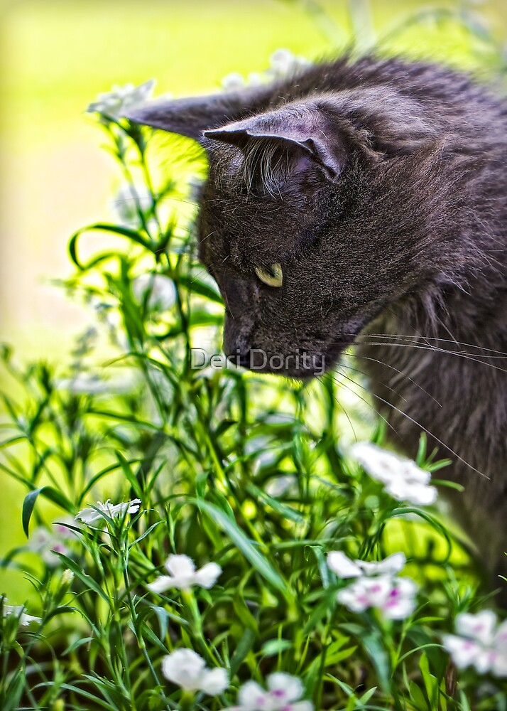 Winston Sees a Mouse by Deri Dority