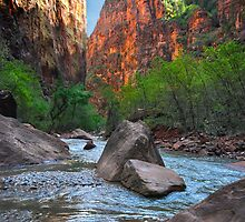 Exploring Zion by Barbara Manis