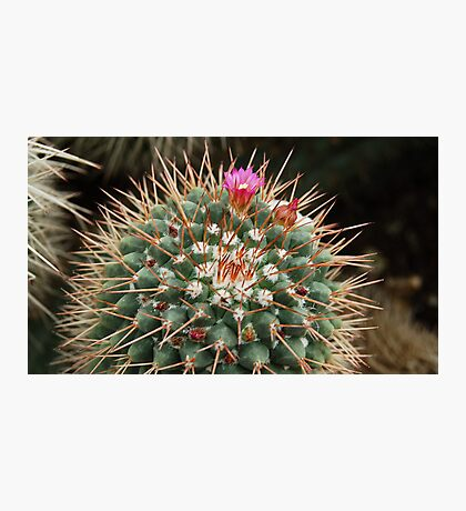 Protected Flowers ! Photographic Print