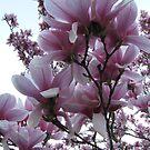 Pink Perfection by Sandra Hopko