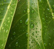 Triple leaf by Tisa