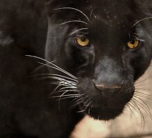 Leopard Eyes by Lisa G. Putman