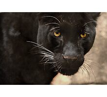 Leopard Eyes Photographic Print