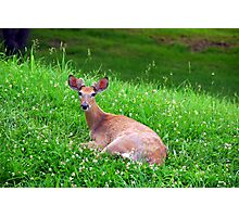 Bambi's Bro in Bed of Clover Photographic Print