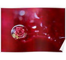 Rose and Droplet Poster