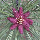 Ponderosa Pine Flower by Paul Morgan
