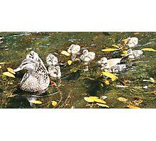 Ducks Photographic Print