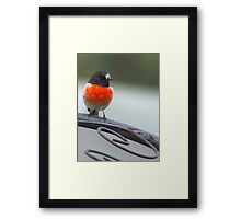 Came to brighten the morning Framed Print