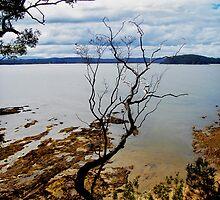 Seaview by Virginia Daniels
