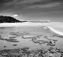 Sea Inlet by Virginia Daniels