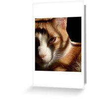 Tiger,Tiger Burning Bright Greeting Card