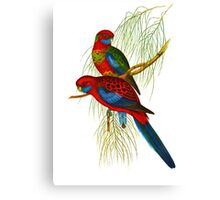 The Adelaide rosella Canvas Print