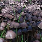 Let Me Take You To Fungi Town by Meg Hart