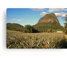 Pineapple Plantation Canvas Print