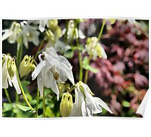 Tissue Paper Flowers Poster