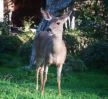 Smile, Deer by jdbussone