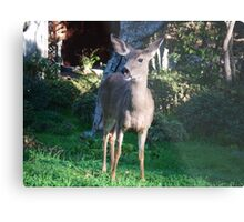 Smile, Deer Metal Print