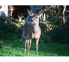 Smile, Deer Photographic Print