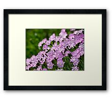 Small Purple Flowers Framed Print