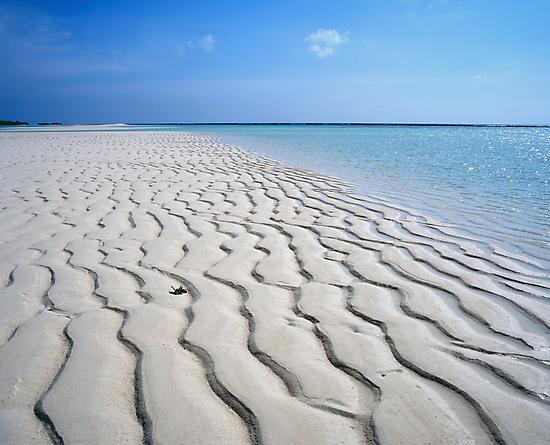 Endless Maldivian Beach by Peter Doré