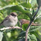 New Baby Birds. by PeterWort