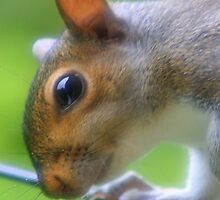 Squirrels face. by PeterWort