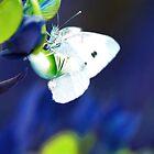Flutterby by Bronwyn Bruce