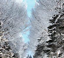 Hoar Frost Path by Sandra Parlow