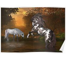Sunset .. the stallion and the mare Poster