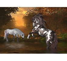 Sunset .. the stallion and the mare Photographic Print