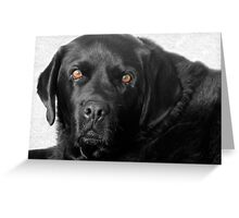 Handsome Hound Greeting Card
