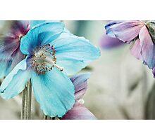 Himalayan blue Photographic Print