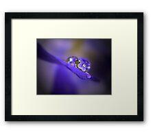 Violets In Water Refraction Framed Print