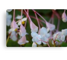 Begonia Dance Canvas Print