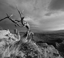 Wind Dancer by Mitchell Tillison